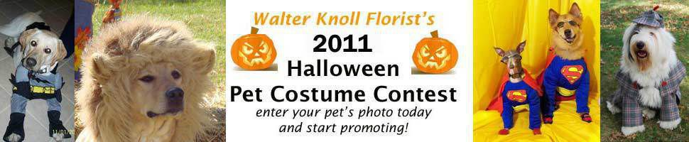 Pet Costumes 2011
