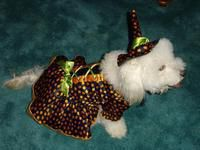 Daisy in her Halloween outfit designed by Natalie