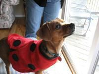 Milo and Mommy are lady bugs!