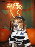 Slammer Scooby