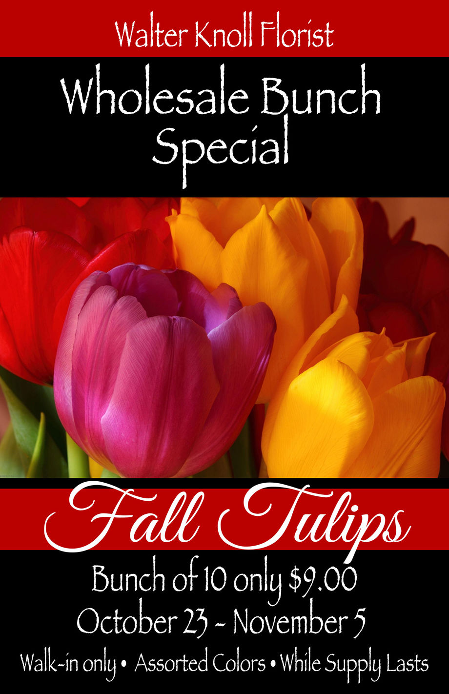 Fall Tulips Bunch Special Walter Knoll Florist