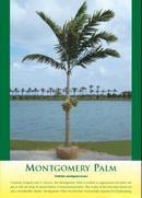 Montgomery Palm