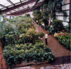 Arnold Greenhouse